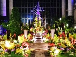淡路夢舞台 奇跡の星の植物館 ラン展2019開催中!