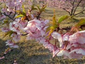 はやめの春がやって来た!