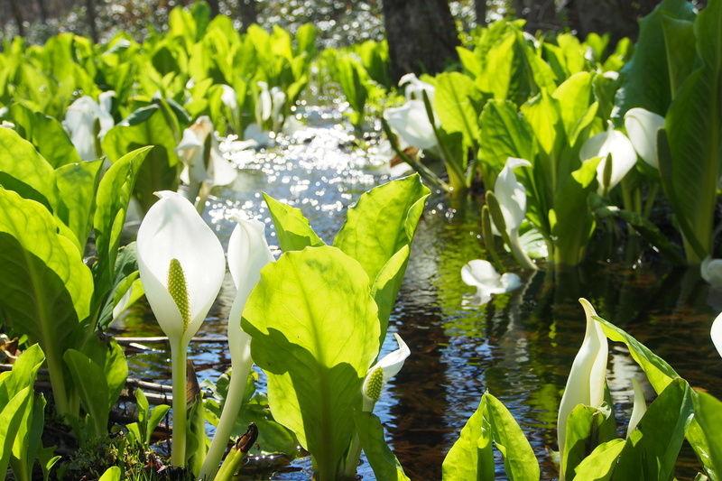 春の花 最新の開花情報