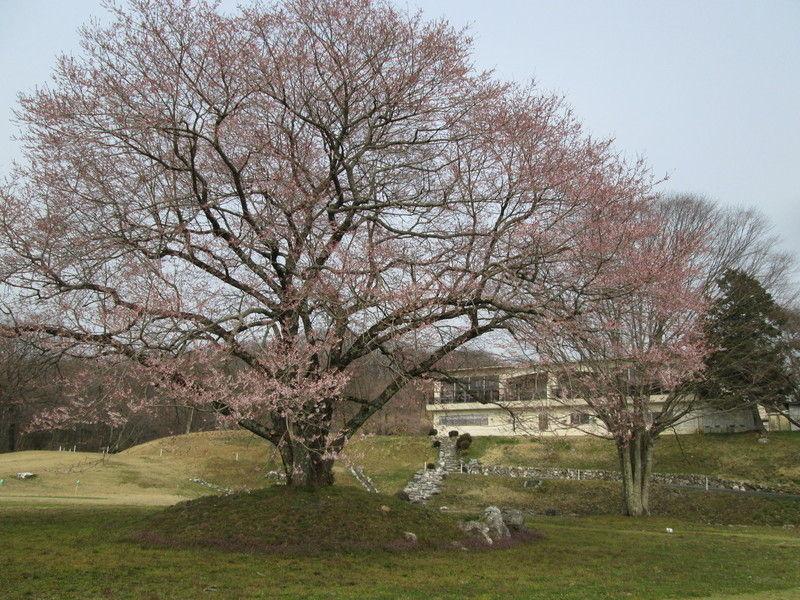 春の訪れ*