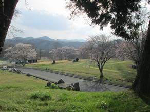 山並みとの桜