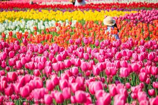 春を満喫「世羅高原農園」