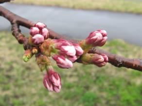 晴れ間から覗く庄内の春