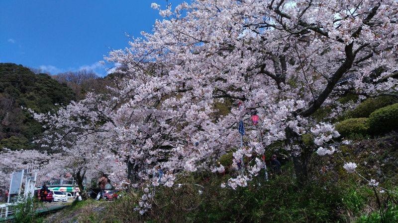 春の海津大崎