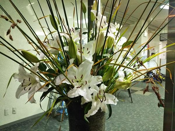 館内でもお花を楽しめることができます♪