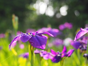 海浜自然公園を歩いてお気に入りの花を見つけてみませんか?