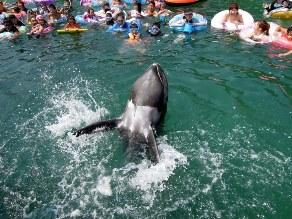 家族みんなで楽しめる!くじらと泳げる海水浴場!