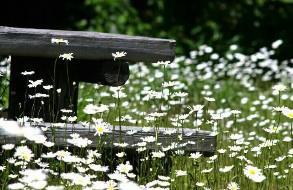 目の前に広がる花畑にうっとり
