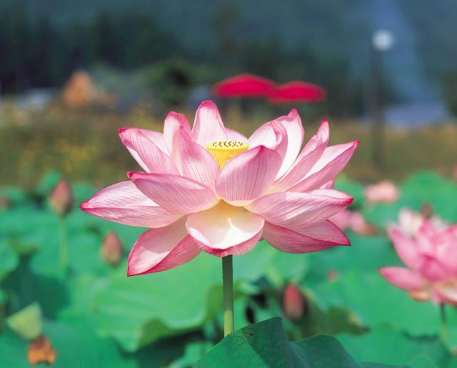 130種の花はすが咲き誇るお祭りです。