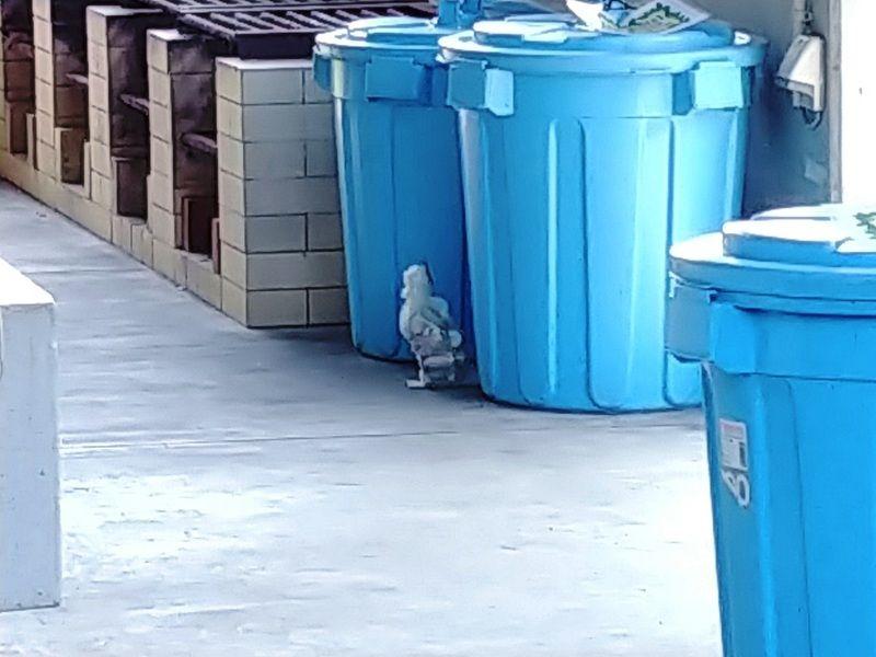 ある日のキャンプ場・・・鳥がいる!