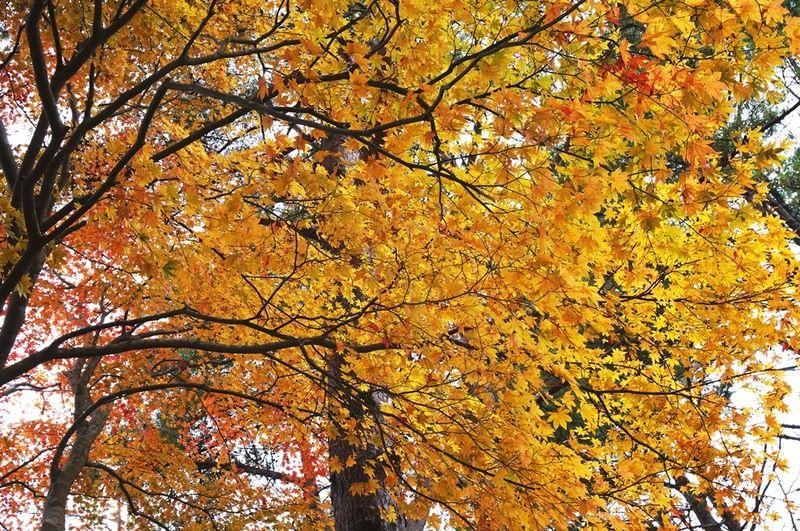大島も秋が深まってきました。