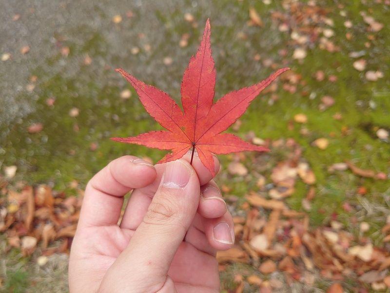 キャンプ場の紅葉は見頃です!!ワクワクFriday⑰