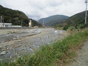 自然の中の豊かな河口