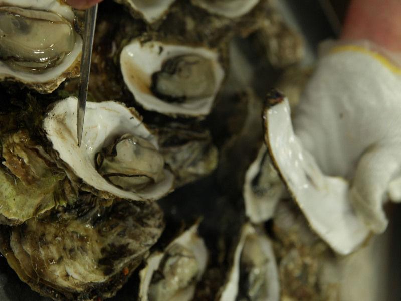 この時期の旬の味覚と言えば牡蠣! リアス牡蠣まつり唐桑