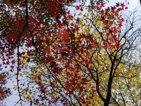 天城の紅葉状況♪