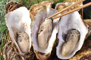 今が旬!気仙沼の牡蠣!2020年1月5日まで!