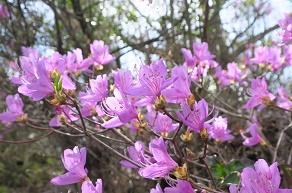 大久野島の春のお便り