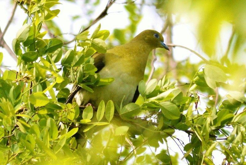 南阿蘇の春の鳥② ~綺麗な色の鳥~
