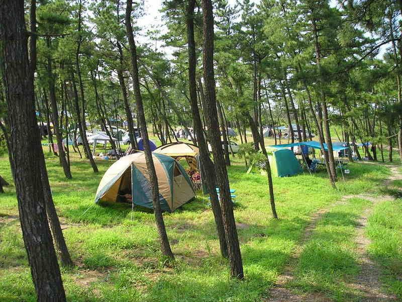 キャンプ場の営業がはじまりました!!