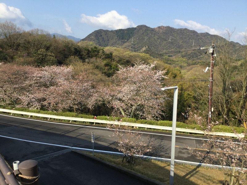 桜名所 本谷自然公園