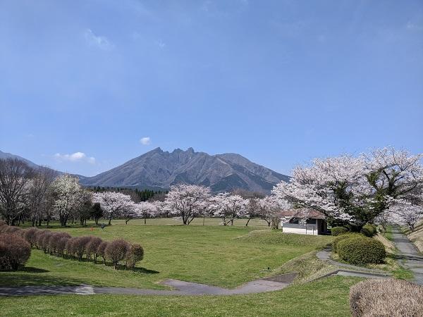 春のお散歩、春の花見♪