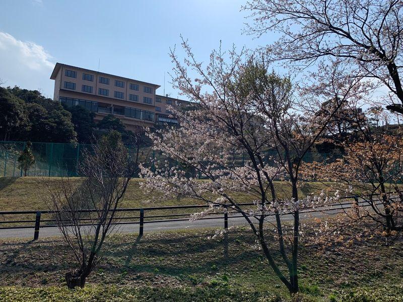 桜舞うキャンプ場