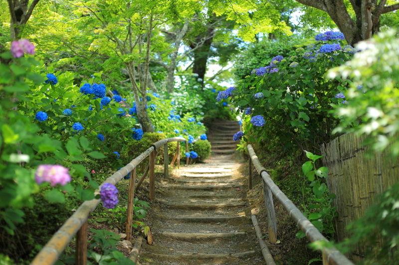 秘境! 花に癒される山寺