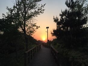 明日は夏至!展望台から見る夕陽