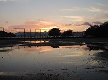 雨の大久野島