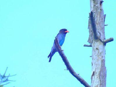 色も鮮やかに心地よい鳥のさえずり♪