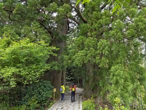 初めての方でも安心!地元ガイドさんと行く「熊野古道めぐり」