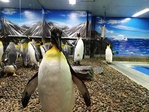 休暇村から3分で水族館!「越前松島水族館」