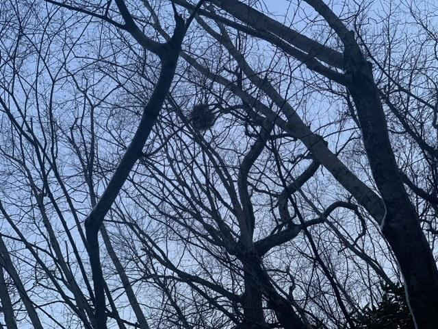 樹木の上には『謎の球』!?