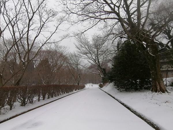 冬の南阿蘇でも雪の日ならではの楽しみ方がありますよ♪