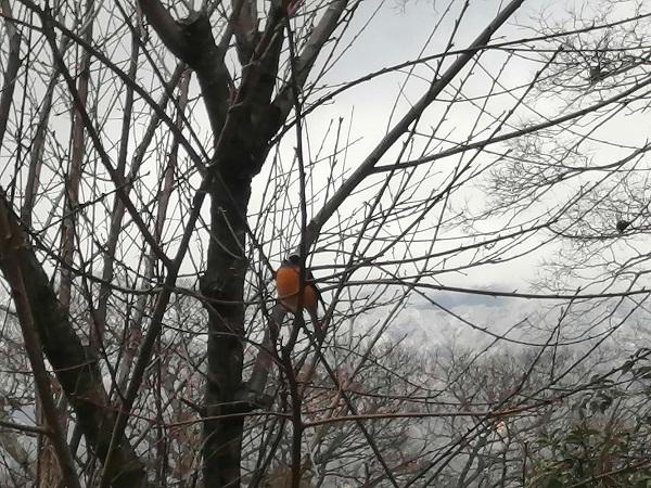 木の葉が少ないこの時期は、野鳥観察には最適です。