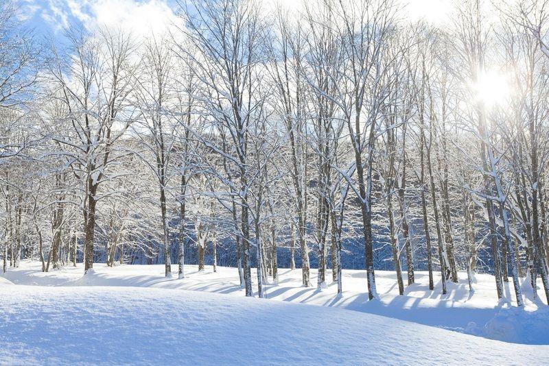 雪景色は今が「旬」!