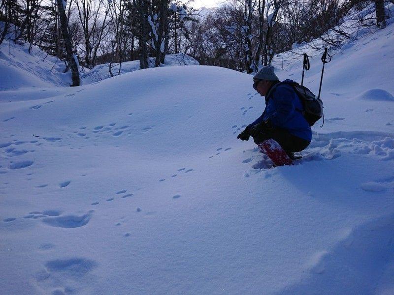 雪の上を駆け回るウサギのヒミツを知ってしまった!