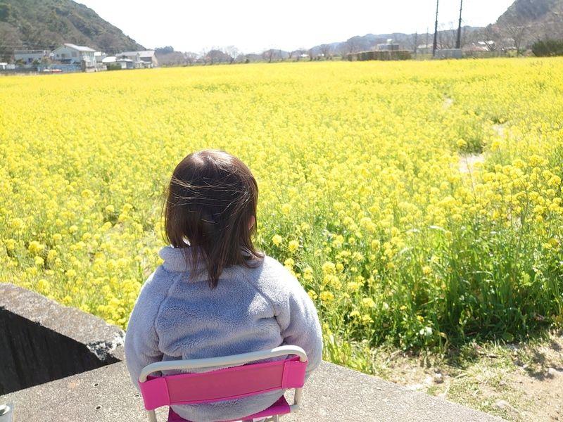目の前が菜の花畑 絶景チェアリング