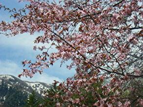 奥日光 春の開花情報