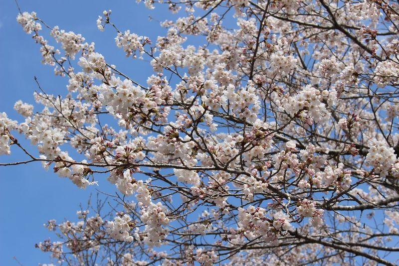 休暇村 園地へ春の訪れ