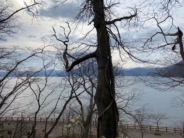 木にぐるぐる巻きついている木