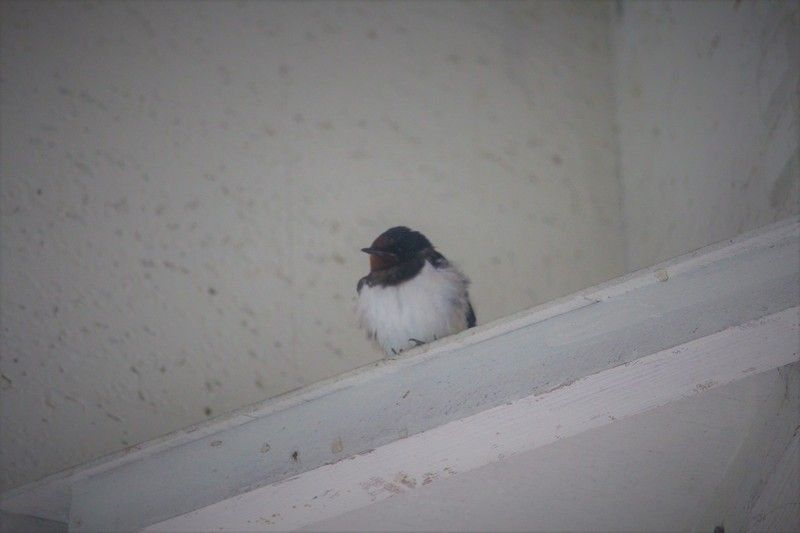 春とともに野鳥も到来!