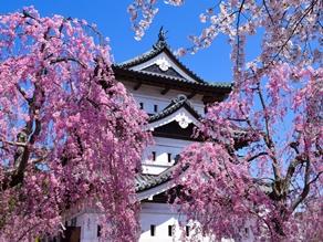 旅Q「みちのく三大桜巡りツアー」に行ってきました!