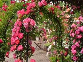 花の王様と女王の饗宴♪ばらまつり&クレマチス展
