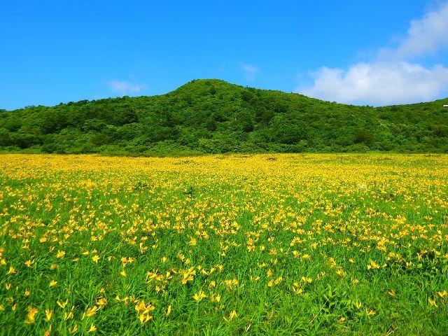 初夏のおすすめバスツアー♪「雄国沼湿原」見学バスツアー