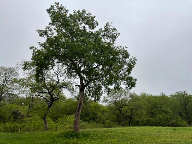 雨の日も侮ることなかれ!緑が濃くて綺麗です。