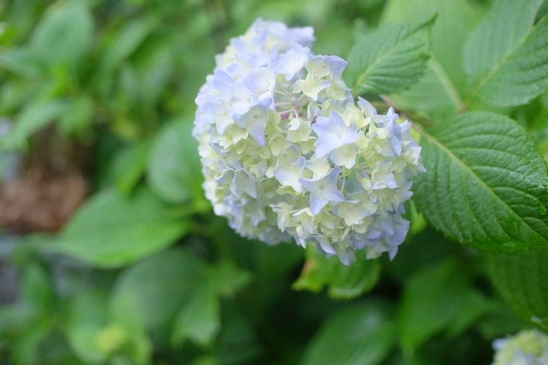 雨の日に綺麗な植物たち