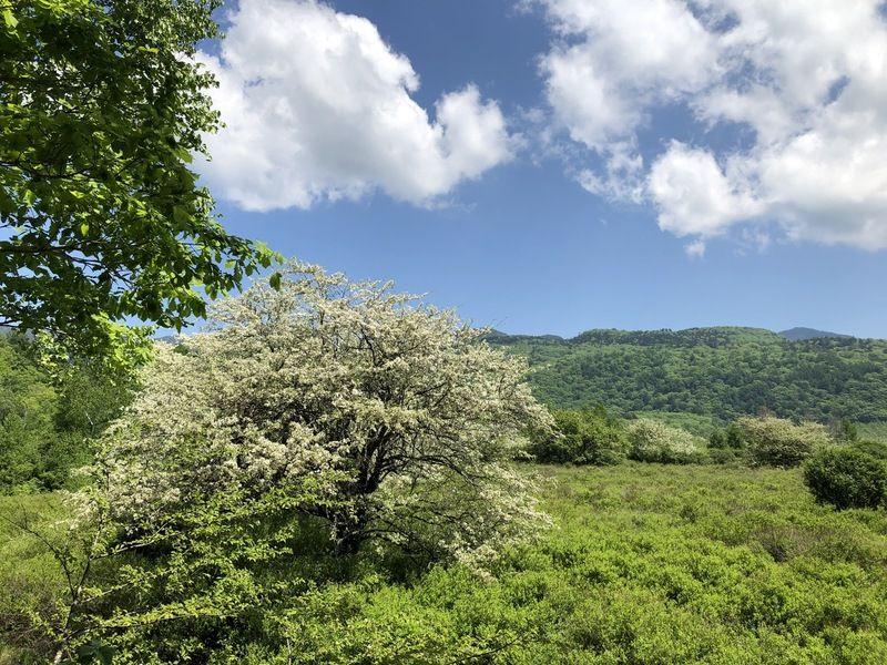 戦場ヶ原で見つけた15の花 ~ズミやワタスゲの開花情報~