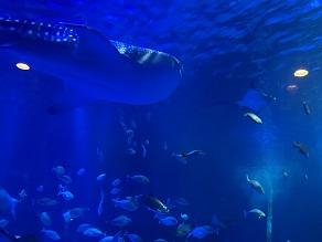 のとじま水族館に行ってきました!