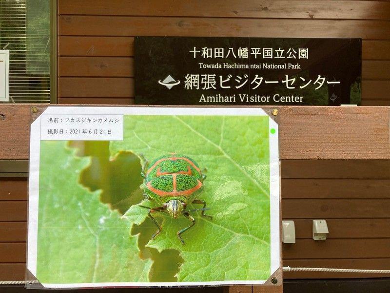 夏休み網張ビジターセンターはイベント盛りだくさん!!